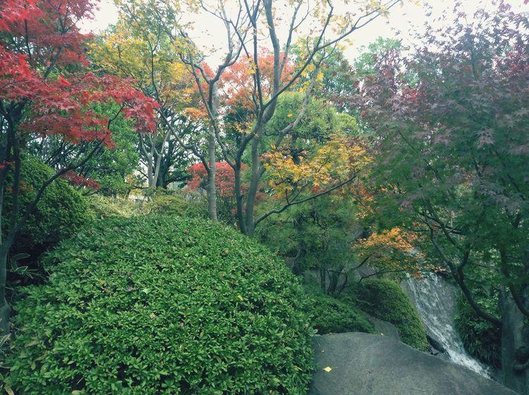 滝 滝 穏やか 通り道 昼休み 秋 紅葉 もみじ 美しい 景色 Beautiful Beauty In Nature Peaceful View Nature 瀑布 瀑布 秋天