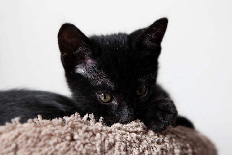Close-up of black kitten relaxing on scratching pole