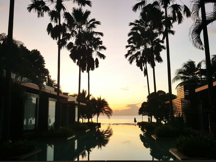 Sunset Tree Palm Tree Travel Reflection Vacations Arrival Water Sea Sky Silhouette Landscape Palm Scenics Outdoors Beach No People Nature