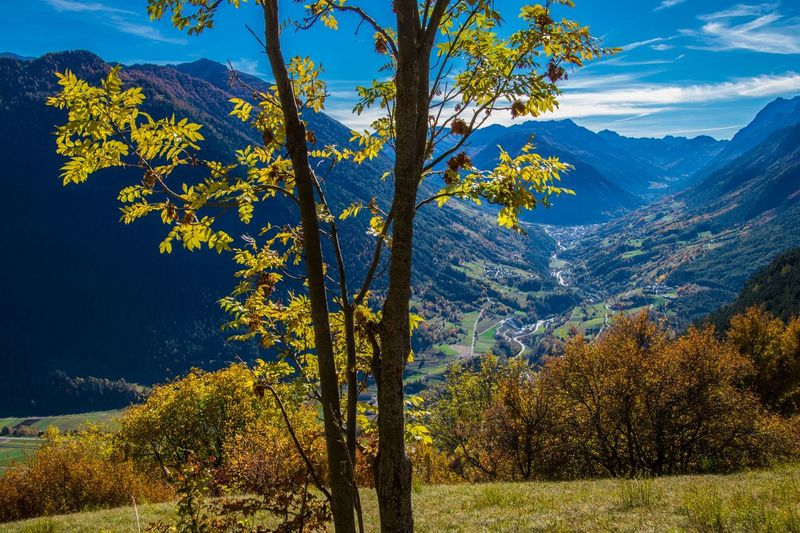 levron,valais,swiss Plant Tree Beauty In Nature Scenics - Nature Tranquil Scene Autumn Mountain Tranquility Mountain Range Nature Landscape Non-urban Scene Sky Land Growth No People Environment Day Outdoors Idyllic Change
