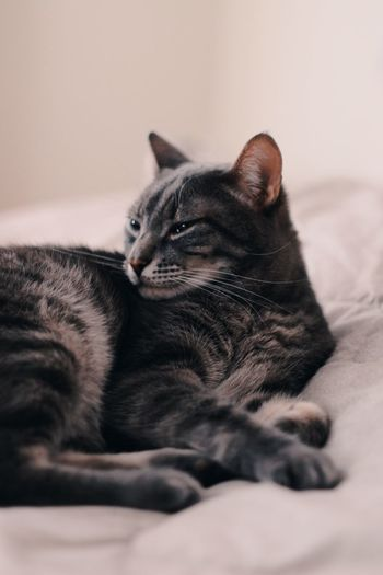 Cat EyeEmNewHere Domestic Pets Domestic Animals Mammal Animal Themes Animal Cat One Animal Relaxation Domestic Cat Bed Feline Indoors  Lying Down Resting Close-up No People Home Interior EyeEmNewHere