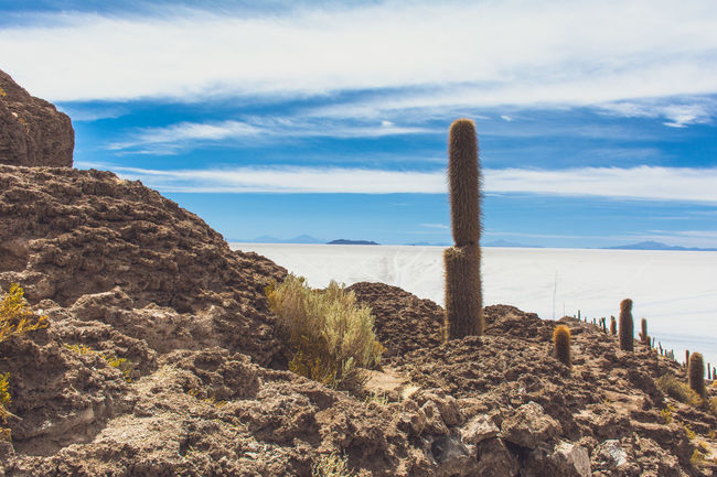 Isla Incahuasi - The Bolivian Salt Flats Beach Beauty In Nature Bolivia Uyuni Cacti Cactus Cactus Cactus Flower Cactus Garden Cloud - Sky Geology Horizon Over Water Idyllic Nature Plant Remote Rock - Object Rock Formation Salt Flats Scenics Sea Shore Sky Tranquil Scene Tranquility Water