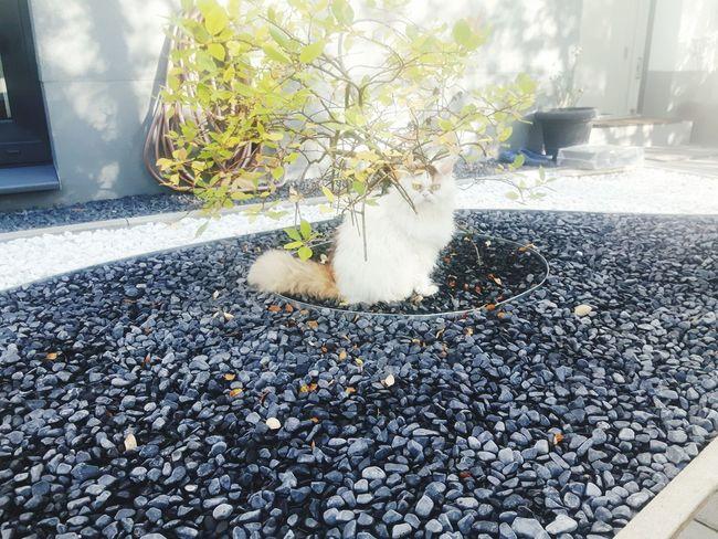 Cirratus Ulala Zen Garden Zen Attitude Zen Rocks Japanischer Garten Japanischer Steingarten