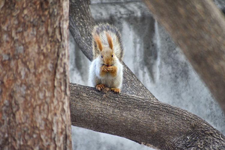 Portrait of squirrel on tree trunk