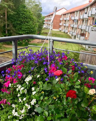 Natural bouquet Balance Arrangement Flower Flowering Plant Plant Architecture Growth Nature Freshness Building Exterior Multi Colored Beauty In Nature Outdoors