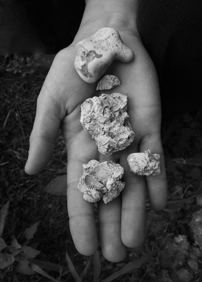 Cropped hands holding fossils rocks