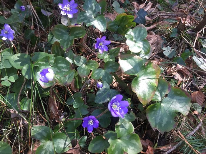 Springtime flower Nature Plant Flower Beauty In Nature Outdoors Forest Spring Flowers