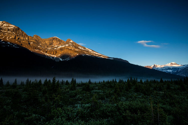Beautiful Mount Thompson at Sunrise. On the scenic Icefields Parkway. In the Rocky Mountains of Alberta Canada, Banff National Park Mountain Scenics - Nature Beauty In Nature Tranquil Scene Sky Tranquility Plant Non-urban Scene Nature Mountain Range Tree No People Landscape Environment Idyllic Land Cloud - Sky Blue Snowcapped Mountain Mountain Peak
