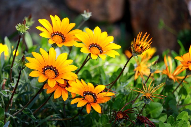 Flower of...