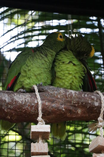 View of parrot perching in cage