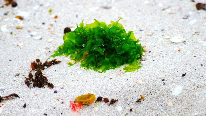 Sand Seaside Beach Australia Beach Photography Beach Lover Showcase: February Western Australia WA Perth Burns Beach White Sand