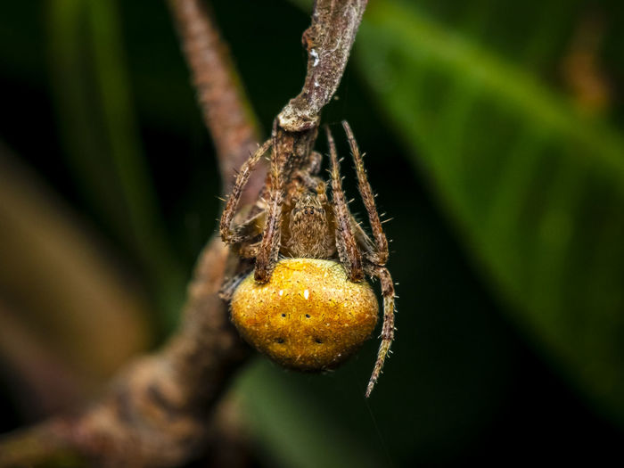 Macro-photo of a large female spider
