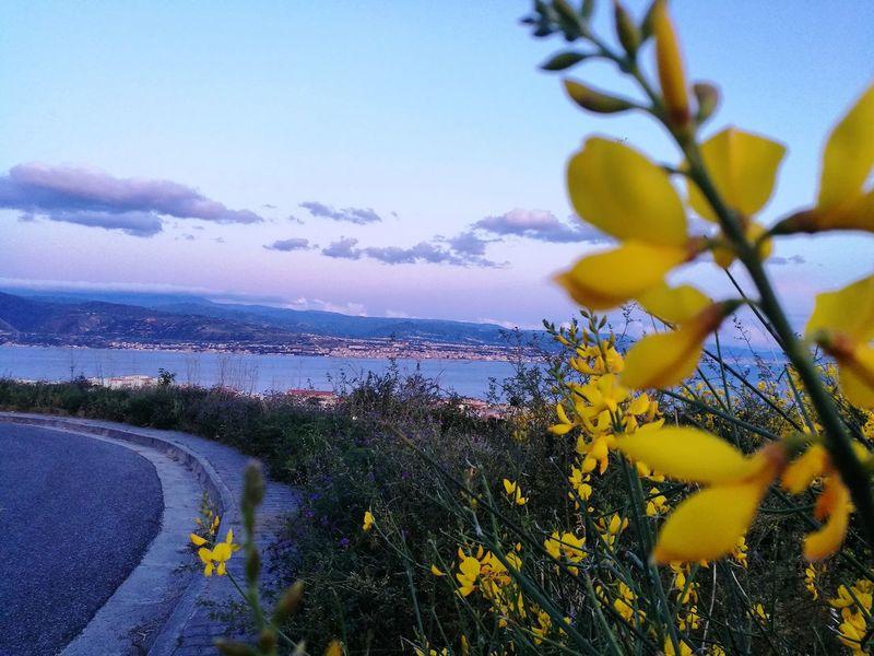 Nature Flower Beauty In Nature Scenics Sky Sea Blue Sunset Landscape Straitofmessina Colorfull