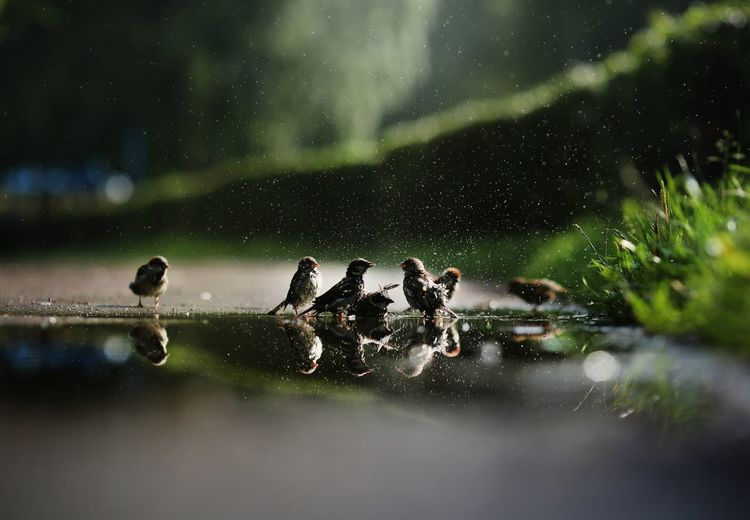 Close-up of birds in water