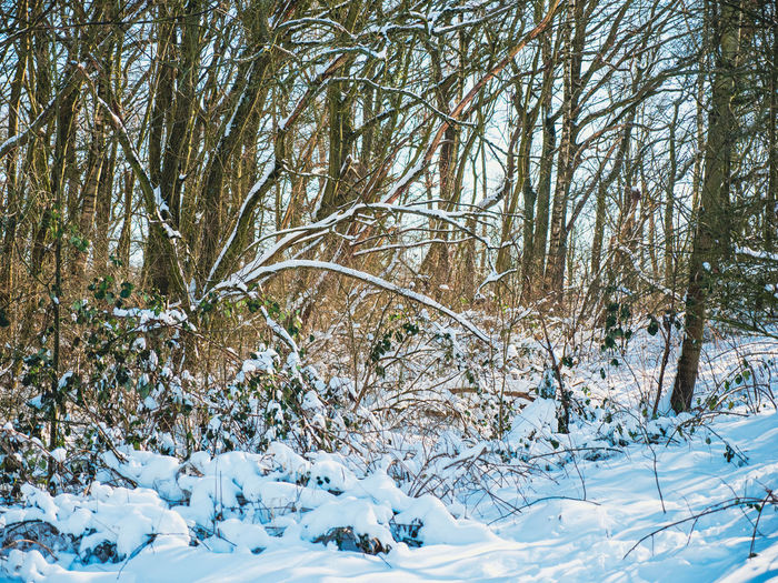 Snow covered bare trees on land