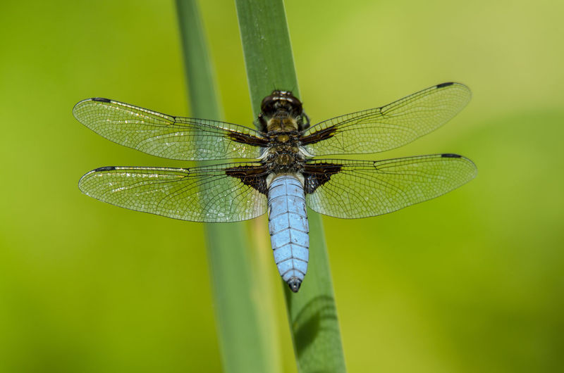 Beauty In Nature Blue Close-up Dragon Fly Dragonfly Insect Macro Macro Photography Macro_collection Natural Beauty Nature Nature Nature Photography Nature_collection Wildlife