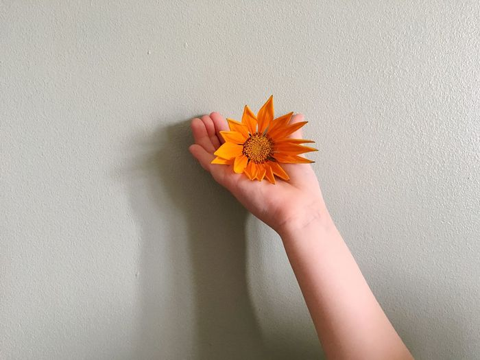 Cropped hand of child holding flower against wall at home