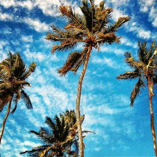 Jericoacoara Jeri Brasil Brazil strand beach praia beiramar gutenmorgen bomdia palmen palm palms