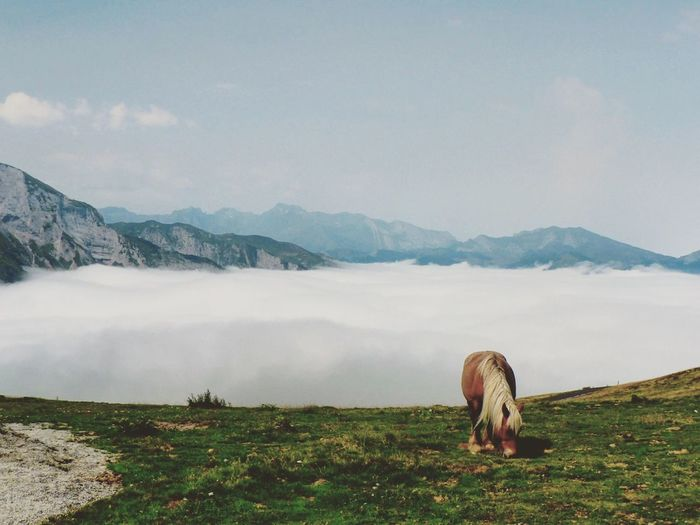 Horse On Mountain Against Sky