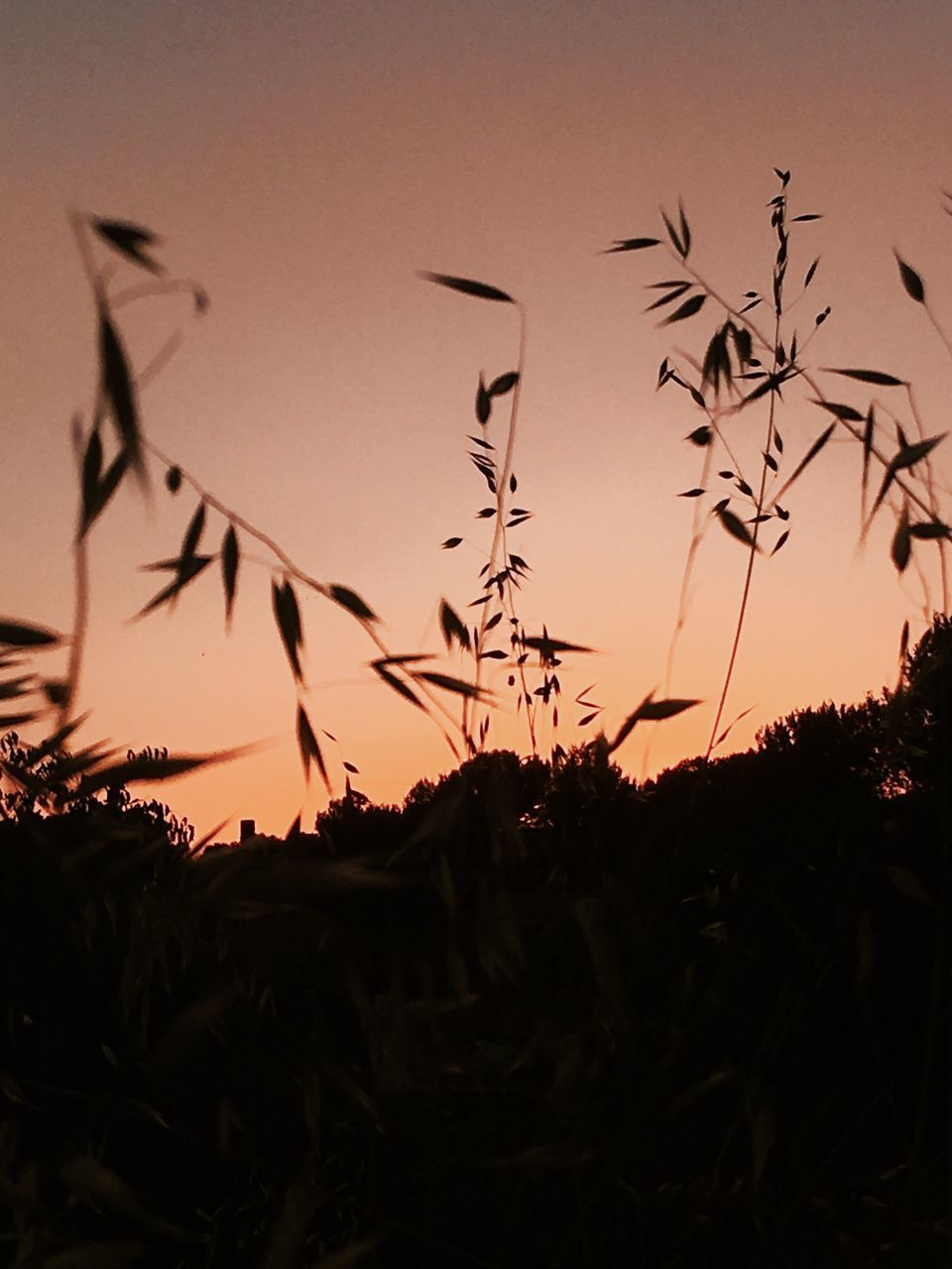 sunset, silhouette, nature, plant, growth, sky, beauty in nature, outdoors, no people, field, tranquility, scenics, grass, tree, close-up, day