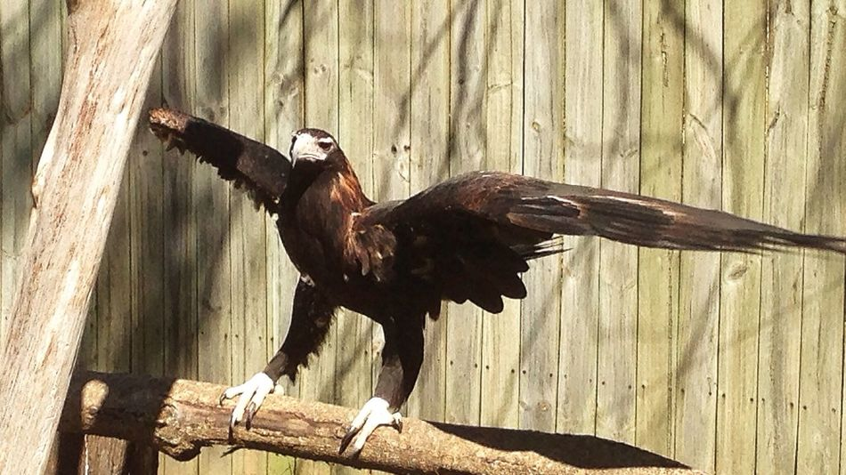 on eagles wings Nature Bird Of Prey