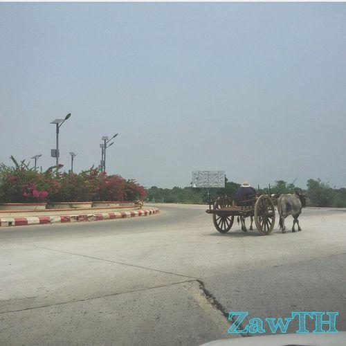 Only in Myanmar. Bullock cart on the Yangon-Mandalay Expressway. Yangon Mandalay Expressway Highway Mandalayinternationalairport Myanmar Burma Igersmyanmars Igersmandalay Vscomyanmar Exploremyanmar Goldenland Bullockcart Lane Roundabout ASIA Burmeseigers Cow Bull Mobilephotography Mycapture GalaxyGrand2 Zawth