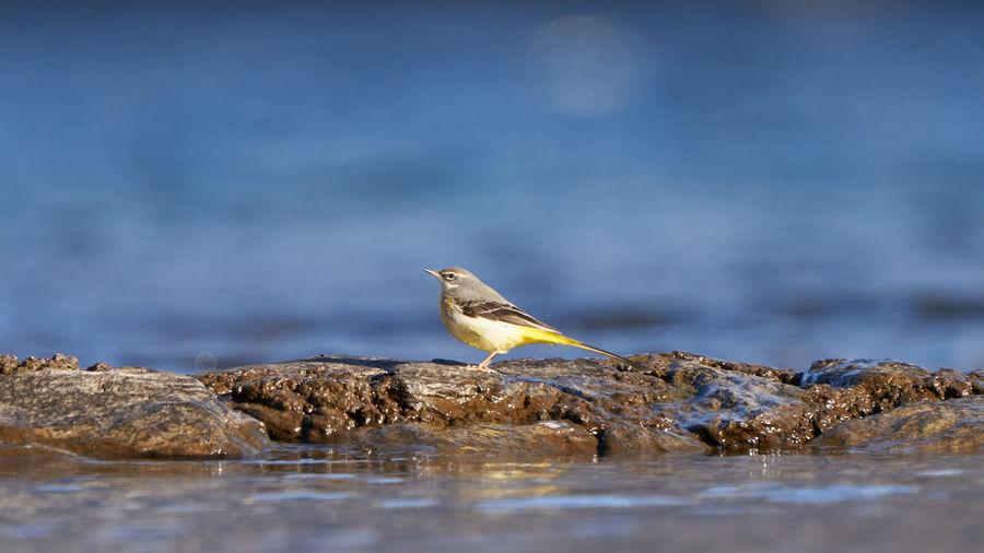 Bird perching on rock by sea