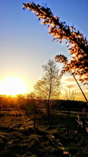Nature in Nature... Sunset Nature Sky Beauty In Nature Sunlight Sun No People Scenics Outdoors Silhouette Tree Tranquil Scene Growth Plant Grass Originalpicture GetbetterwithAlex