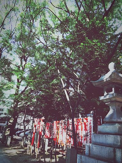 Tree Outdoors Scenics shrine First Eyeem Photo