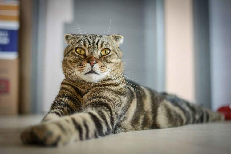 Cats 🐱 Cat