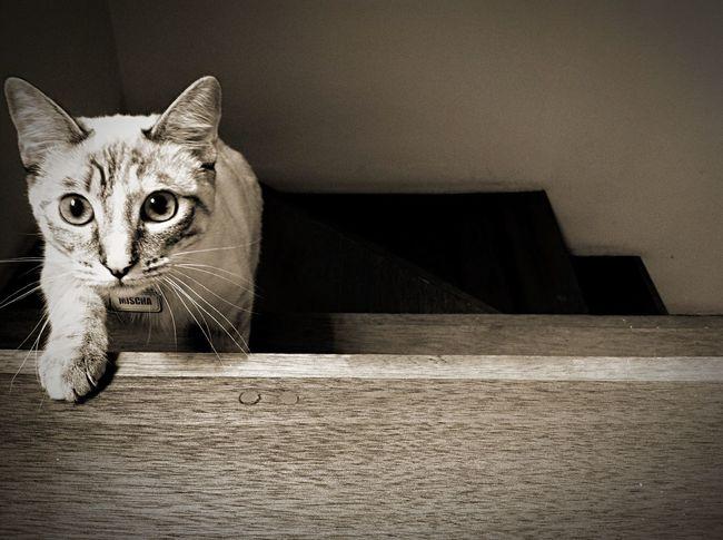 Beautiful Cat My Cat Blackandwhite Taking Photos Cute Cats Pets