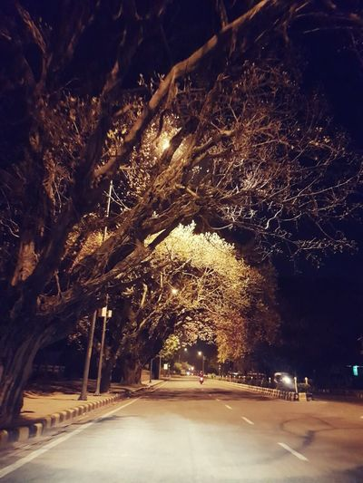 Street Tree Road Outdoors Night Cold Temperature Nature Illuminated First Eyeem Photo No People Car Millennial Pink