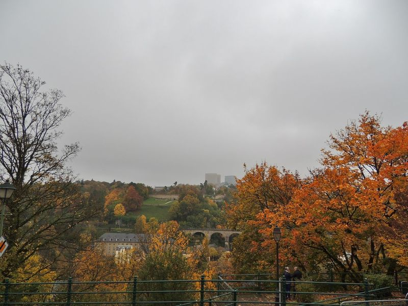 Autumn Autumn Colors Autumn Leaves Benelux Colors Europe Landscape Landscape_Collection Landscape_photography Luxembourg Luxembourg City Luxembourg In Photos  Luxembourg Streetphotography Luxembourg_Collection Luxembourgcity Luxemburg Nature