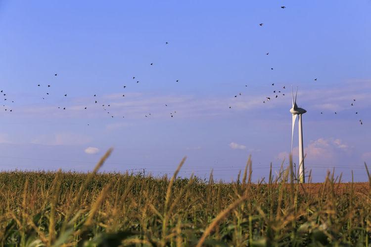 Flock of birds flying over field