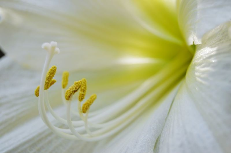 Flowers Flowers, Nature And Beauty Flower Photography Flowers,Plants & Garden Flowerphotography Beauty In Nature Nature Nature Photography White Flower Flower Macro White Flowers Flower Head Flower Macro Close-up Plant
