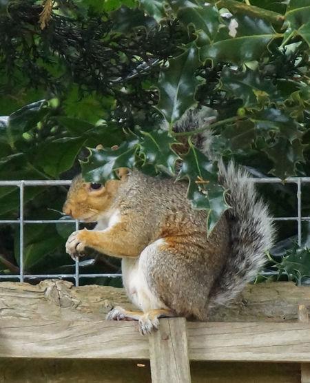 Animal Animal Behavior Animal Themes Animals In The Wild Eating Focus On Foreground No People One Animal Wildlife Zoology
