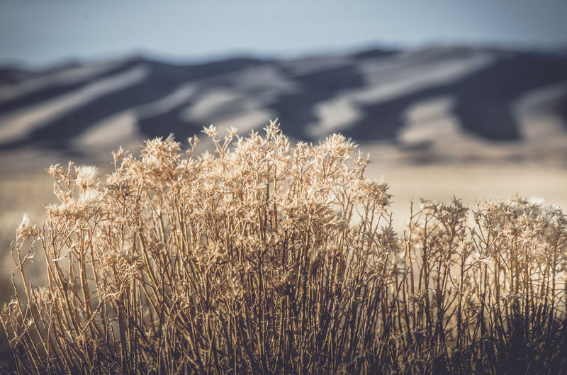 Beauty In Nature Day Dry Environment Field Focus On Foreground Grass Growth Land Landscape Mountain Nature No People Outdoors Plant Scenics - Nature Sky Sunlight Tranquil Scene Tranquility