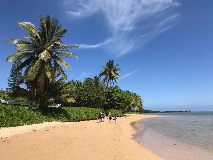Molokai Tree