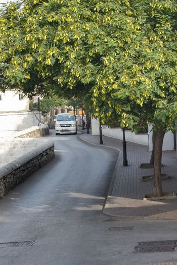 Adapted To The City Gibraltar Gibraltar Landscape Gibraltarview Gibraltar Views Gibraltar Is British Transportation Transport Taxi Vehicle Trees Trees And Road Growth Tree Nature Growth Road Footpath Scenics Green Urban Landscape Urban Gibraltar Street View Motor Vehicle Wall