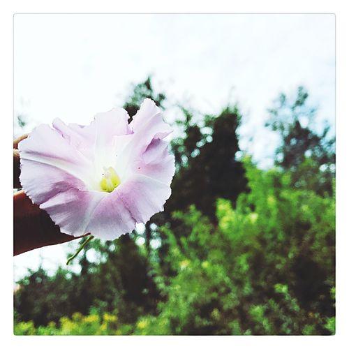 Pureté 🌸 Légèreté Pink Flower Fragility Petal Nature