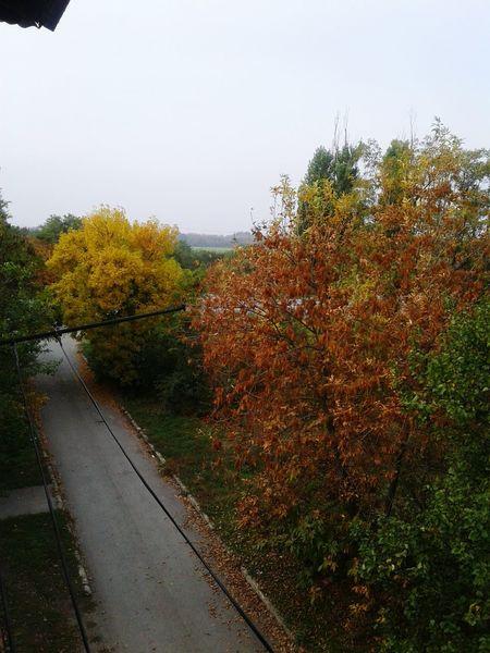 Осень листья Tree Nature Autumn Road First Eyeem Photo
