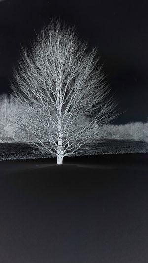 Winter, Upstate Ny