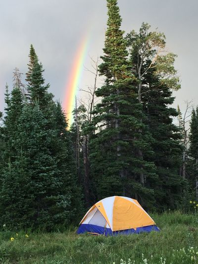 Tent By Trees Against Rainbow In Sky