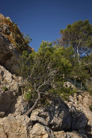 Beauty In Nature Cliffs Cliffside Mallorca Mediterranean  Mountain Nature No People Outdoors Peguera Plant Rock - Object Rocks Scenics Stone Material Travel Destinations Tree