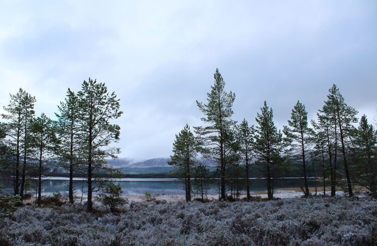 Cairngorms Frost Loch  Scotland Heather Horizon Over Water Lake View Landscape Loch Morlich Mountain Mountain Range Scots Pine Snow Still