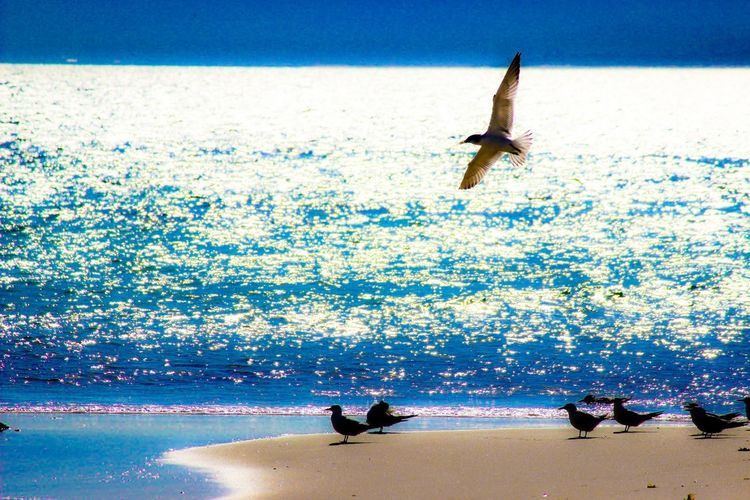 Seagull Bird Flight Water Sea Real People Motion Lifestyles Nature Day Beauty In Nature Beach Sky Mid-air Outdoors