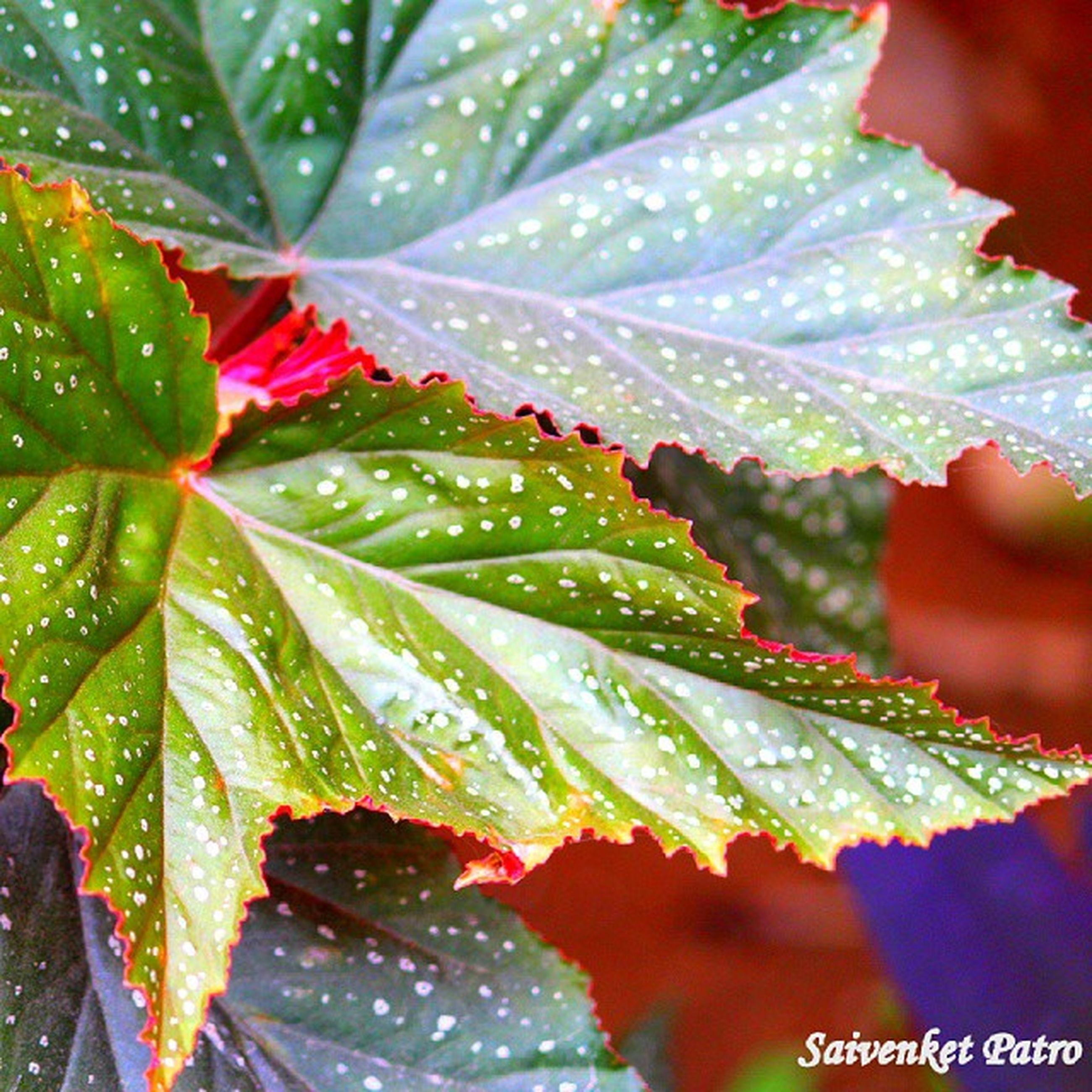 leaf, drop, water, wet, growth, freshness, close-up, plant, nature, beauty in nature, green color, leaves, leaf vein, dew, season, fragility, focus on foreground, weather, rain, raindrop