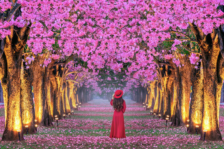 Young woman walking in rows of beautiful pink flowers trees. Plant Tree One Person Flower Pink Color Flowering Plant Growth Nature Women Beauty In Nature Tree Trunk Trunk Standing Freshness Adult Real People Full Length Fragility Springtime Outdoors Purple Change
