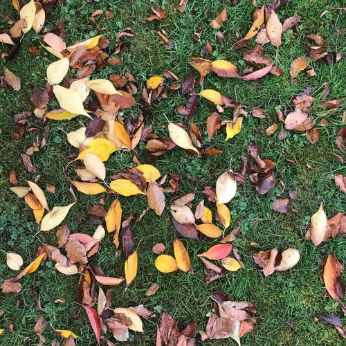 Yellow leaves in November Leaves Full Frame Plant Backgrounds No People High Angle View Day Nature Field Green Color Grass Freshness Directly Above Land Dry Beauty In Nature Plant Part Outdoors Leaf