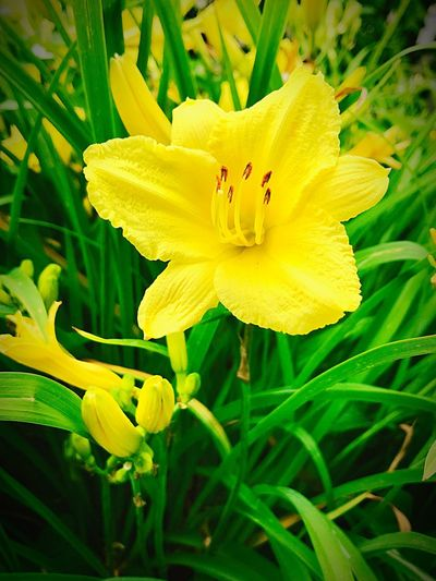 Flower Flowering Plant Plant Petal Fragility Beauty In Nature Vulnerability  Flower Head Growth Yellow Close-up Nature Freshness No People